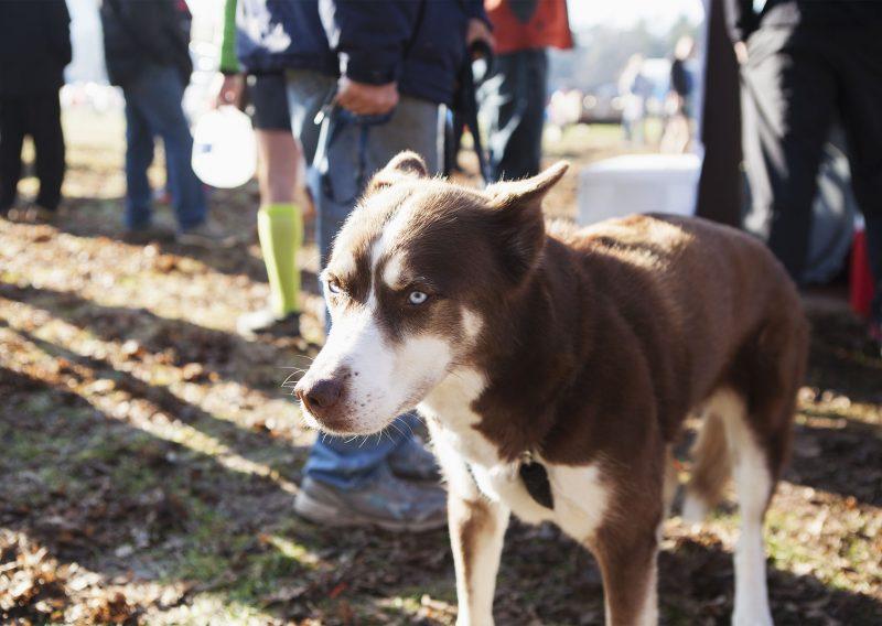 Another Zumbro Dog - Photo Credit Erik Lindstrom