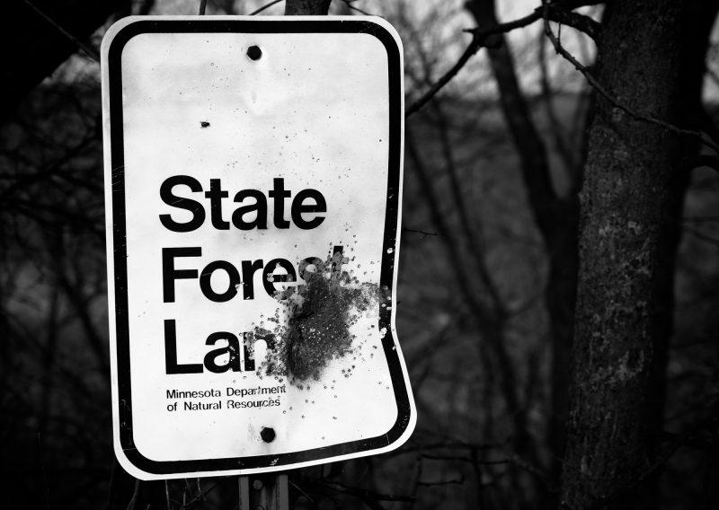 State Forest Land It Is - Photo Credit Zach Pierce