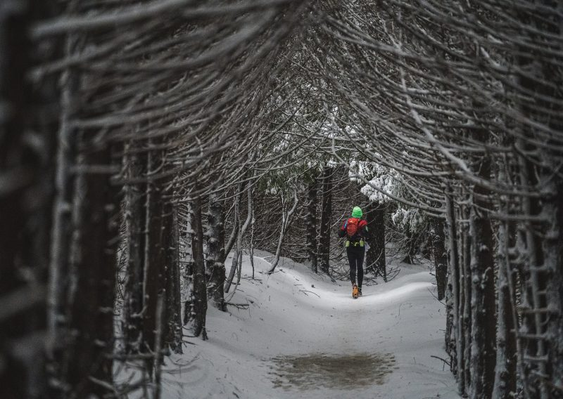 The Hobbit Wodds Blanketed in Snow - Photo Credit Fresh Tracks Media