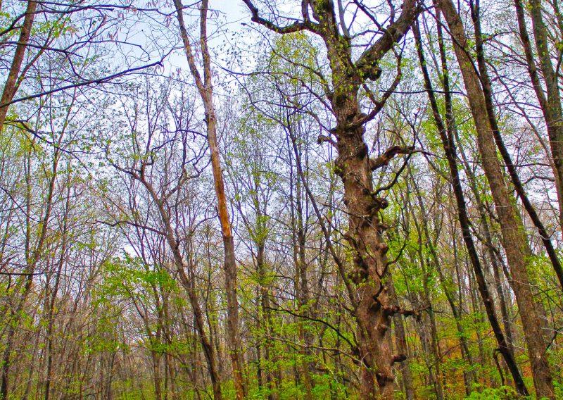 The Strange Woods of Zumbro - Photo Chris Hurst