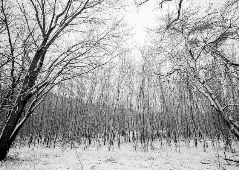 Winter Wonderland in April - Photo Credit Zach Pierce