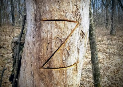 Wold Z - Photo Credit John Storkamp